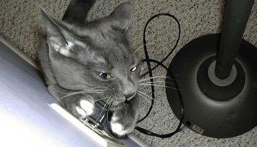 Кот грызёт кабель