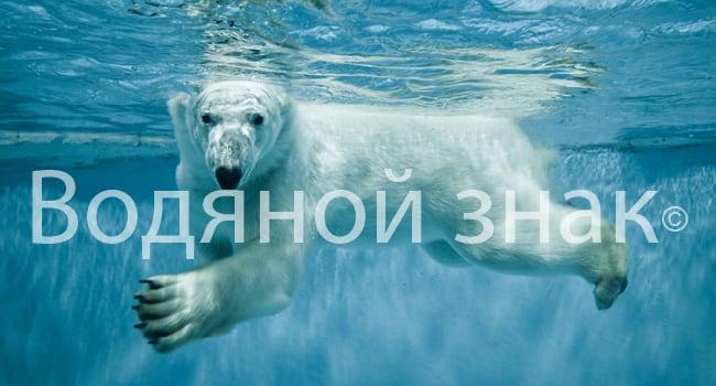 Пример водяного знака на картинке