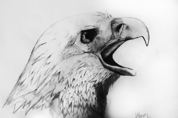 Рисунок орла карандашом