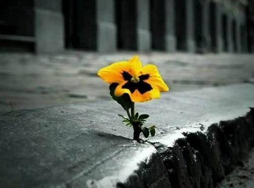 Цветок асфальт