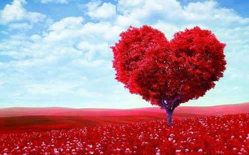 Сердце дерево