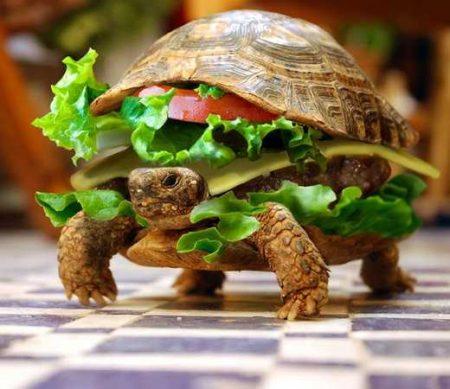 Черепаха бутерброд