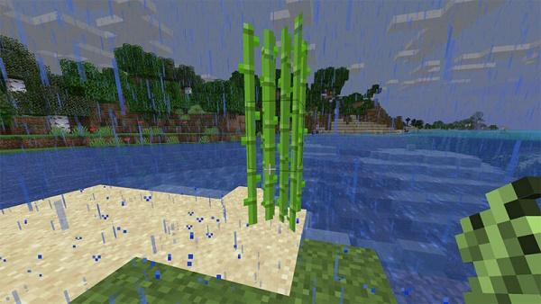 Тростник возле воды