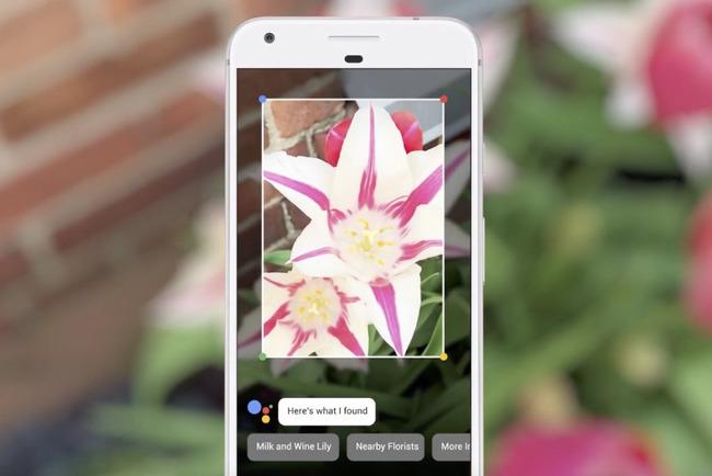 Название цветка в Google Lens