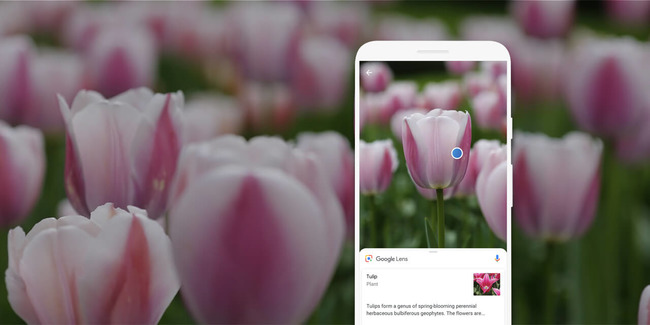 Описание тюльпана в приложении