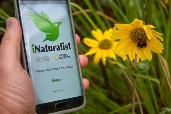 Логотип iNaturalist