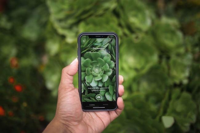 Растения на экране смартфона