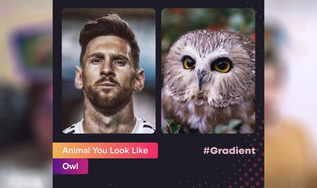 Сравнение человеческих фото с совой