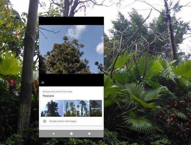 Способ определить дерева по фото