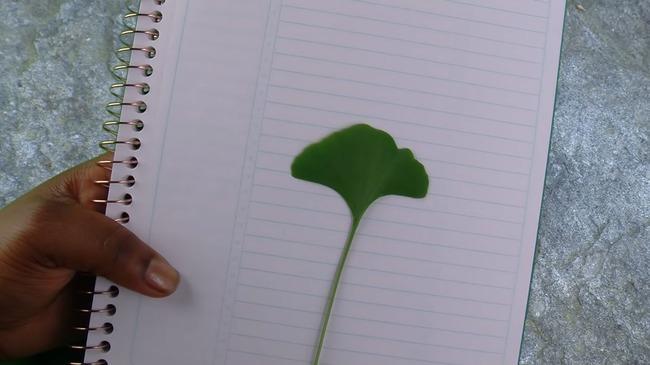 Размещение листа дерева на белом фоне