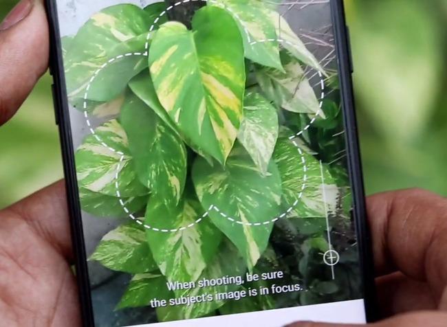 Съемка растения