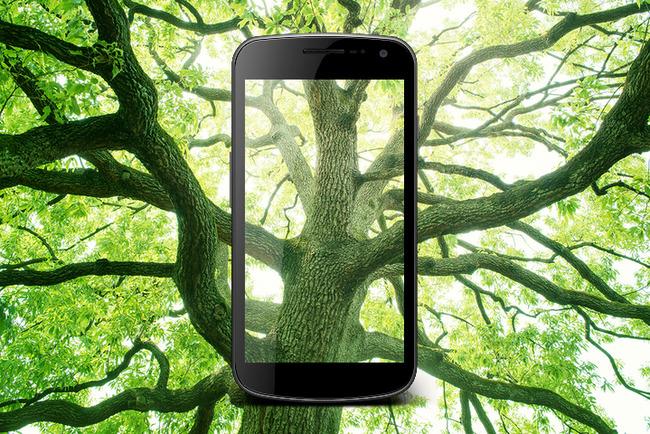 Определение деревьев по фото