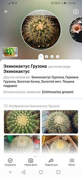 Результат распознавания кактуса