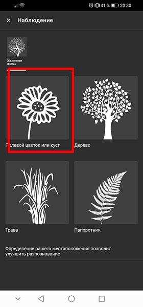 Полевой цветок или куст