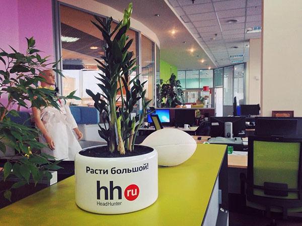 Цветок в горшке в офисе HH