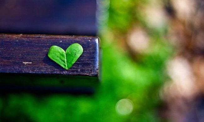 Сердце из листьев на фоне лавочки и травы