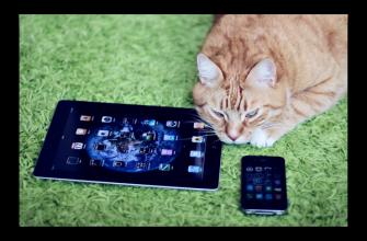 Звуки для котов